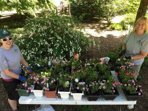 pruning-garden-maitenence