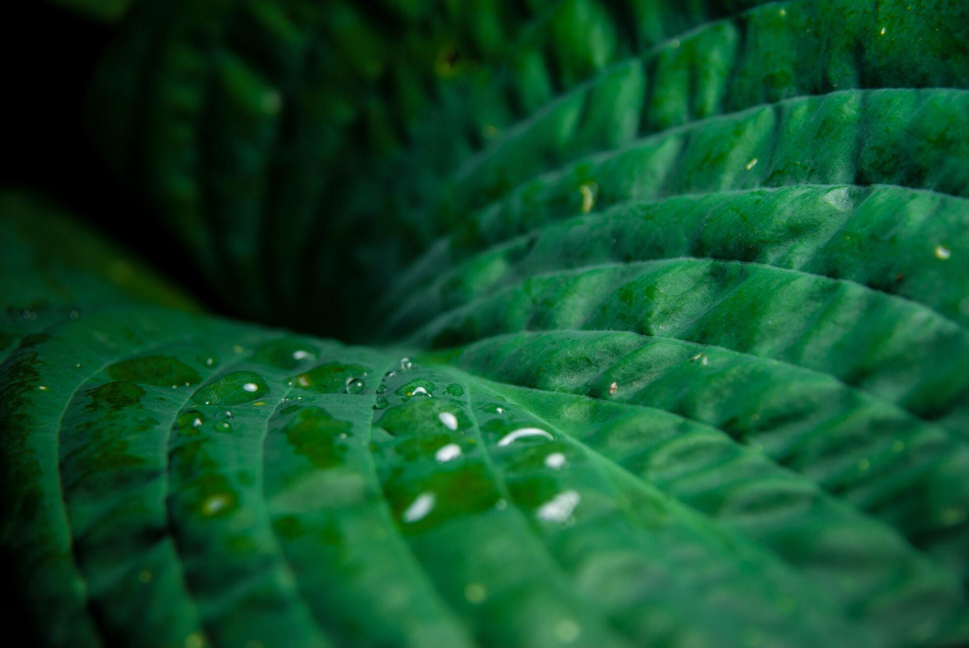 close up leaf with raindrop